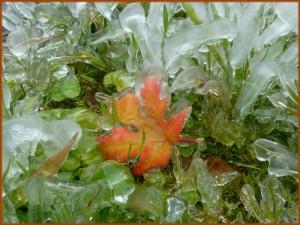 Herbst in Eis