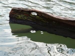 Krokodil Holz Geist