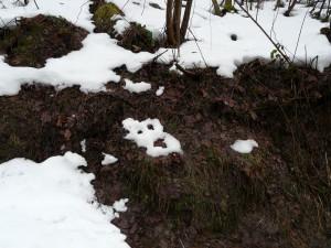 Geist im Schnee