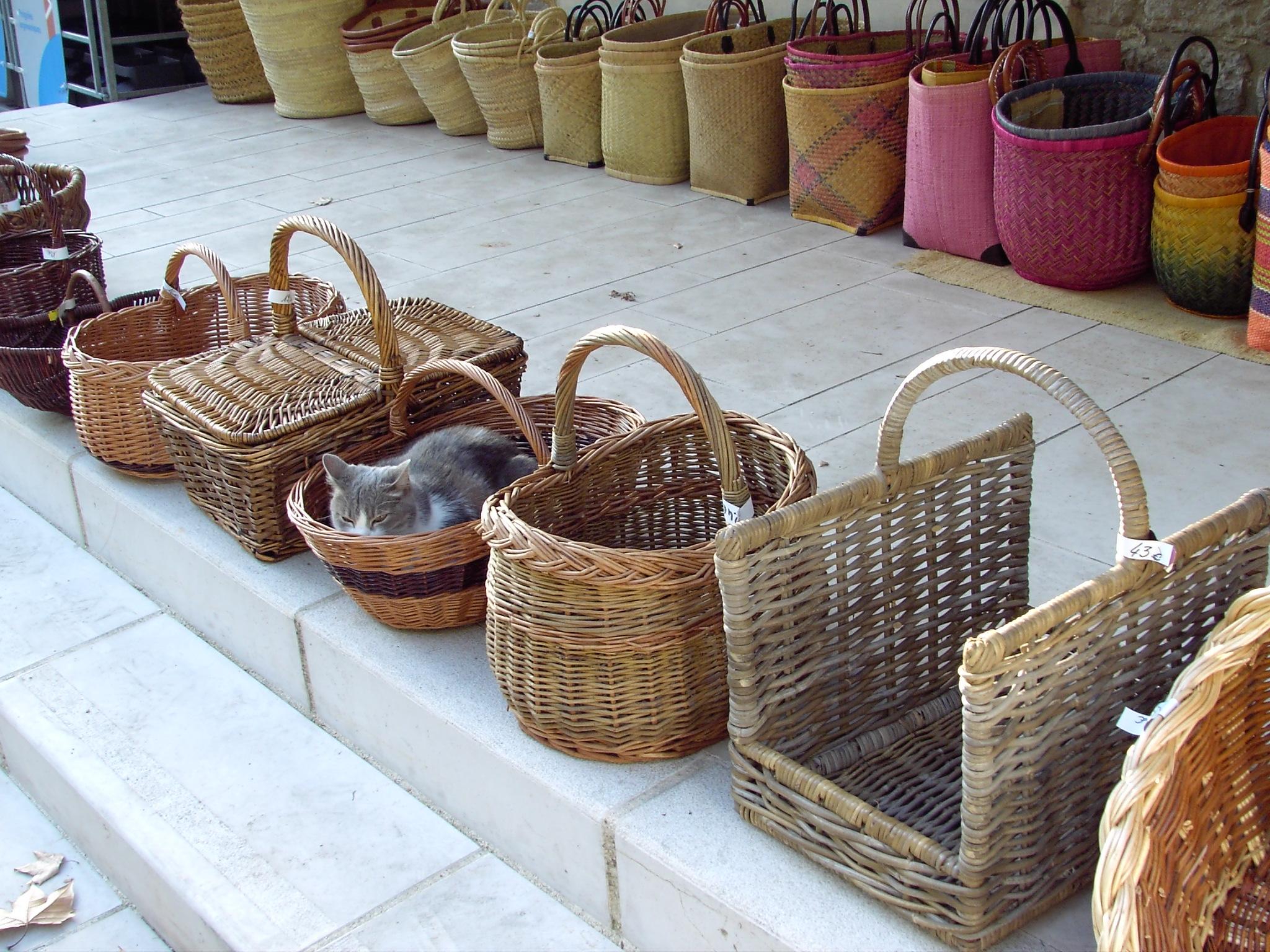 Katze in Südfrankreich